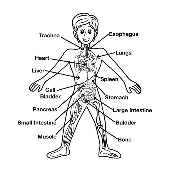 human body diagram for kids human body outline