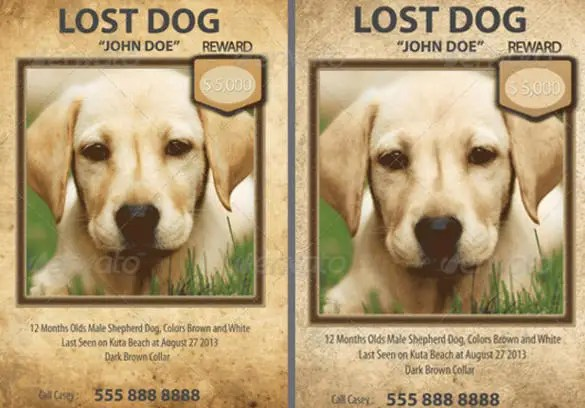 free pet flyer - Athiykhudothiharborcity - lost dog flyer template