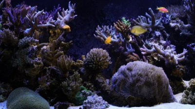 50+ Best Aquarium Backgrounds | Free & Premium Templates