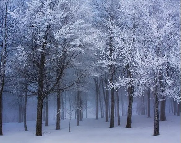 Free Download Of Christmas Wallpaper With Snow Falling 33 Winter Wallpapers Psd Vector Eps Jpg Free