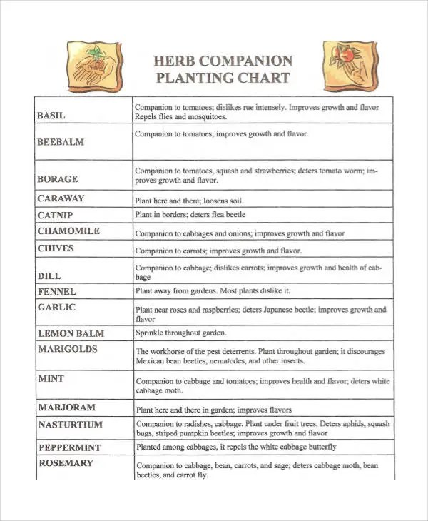 Companion Planting Chart - 9+ Free Excel, PDF Documents Download