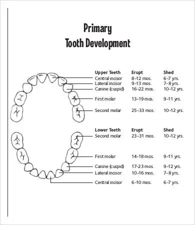 Baby Teething Chart 7 Free Pdf Documents Download Teeth
