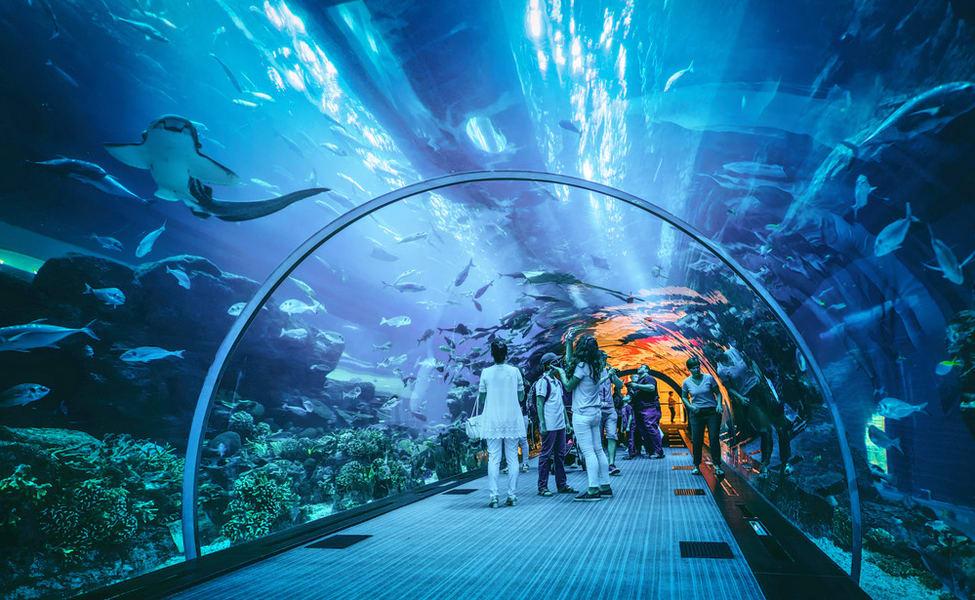 Dubai Aquarium Underwater Zoo Combo Ticket Flat 20 Off Thrillophilia