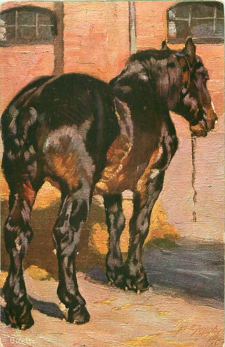 Black Brown Brown/black Horse Stands Facing Away In Yard - Tuckdb