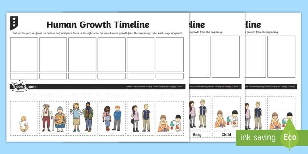 Human Growth Timeline Worksheet / Activity Sheet - human growth - baby milestone timeline