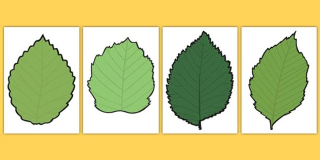 Blank Leaf Templates - blank, leaf, templates, autumn, display