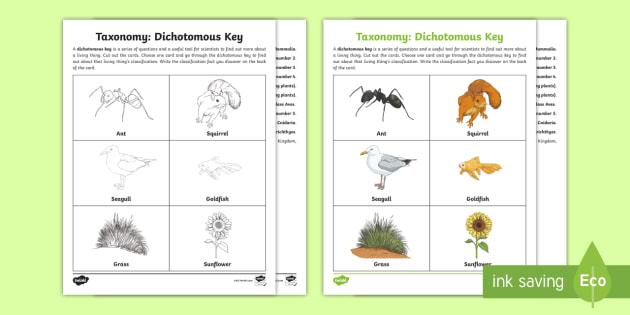 NEW * Taxonomy Dichotomous Key Activity - Life Science, Classification