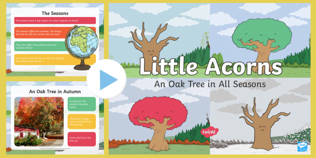 An Oak Tree in All Seasons PowerPoint - Twinkl originals, fiction
