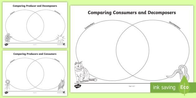Consumers, Producers and Decomposers Venn Diagram Worksheet / Worksheets
