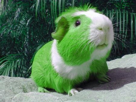 Bikers Quotes Wallpapers Green Guinea Pig St Patricks Day Graphics For Facebook