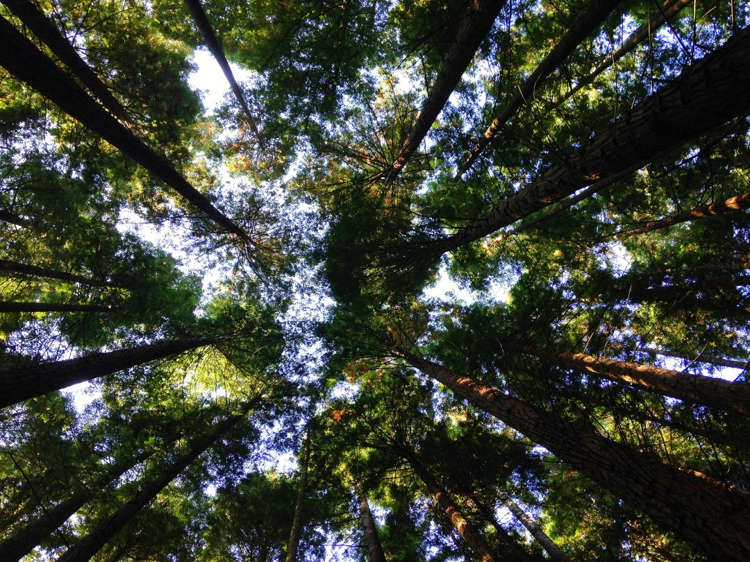 Chicago Bears Hd Wallpaper Treetops Seen From The Ground Photo By Angela Benito