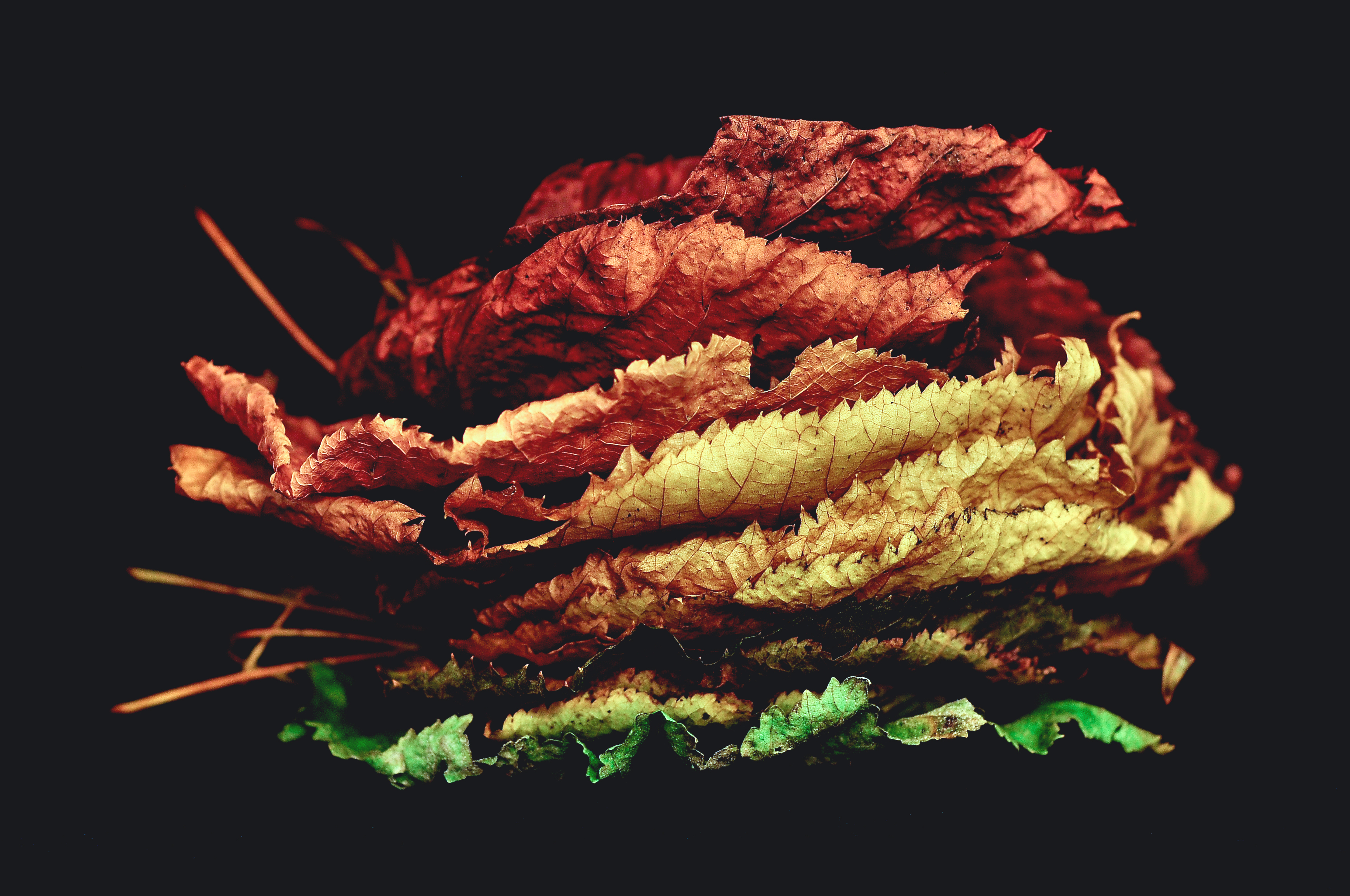 Fall Of The Leafe Wallpaper Life Of Leaves Photo By Davide Ragusa Davideragusa On