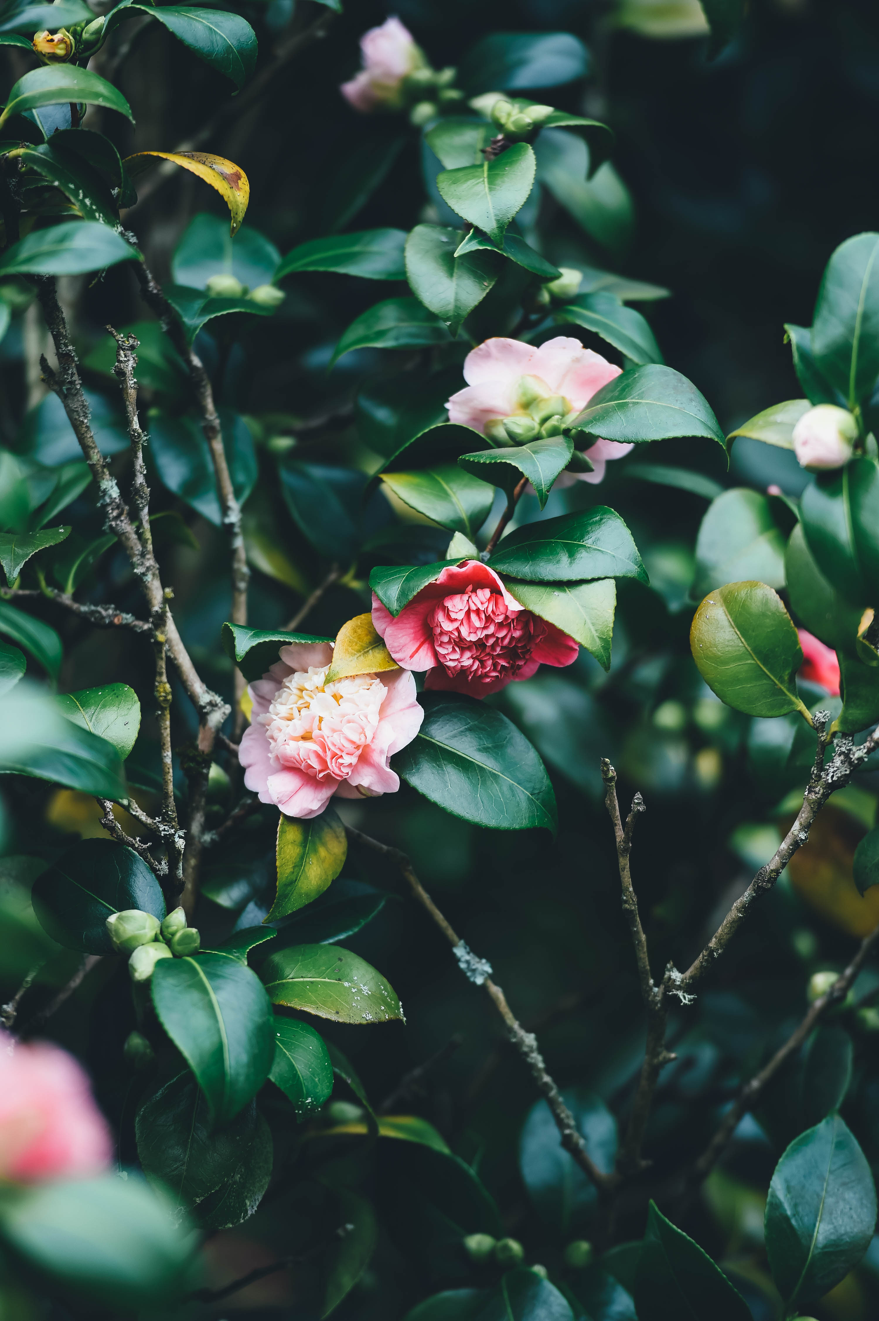 High Hd Wallpaper Download Flower Plant Pink And Blossom Hd Photo By Annie Spratt