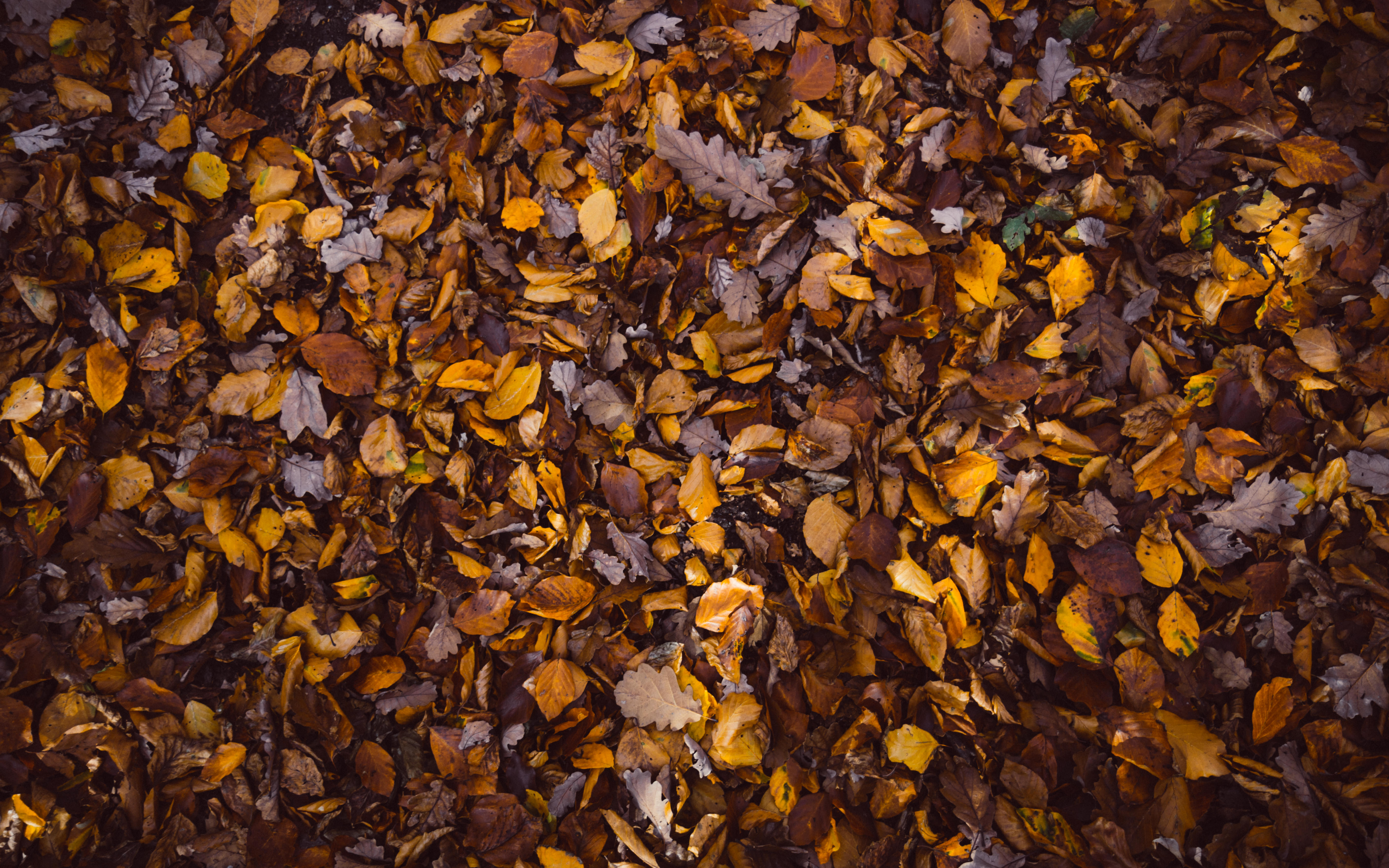 Fall Leaves Iphone 5 Wallpaper Best 100 Fall Background Pictures Download Free Images