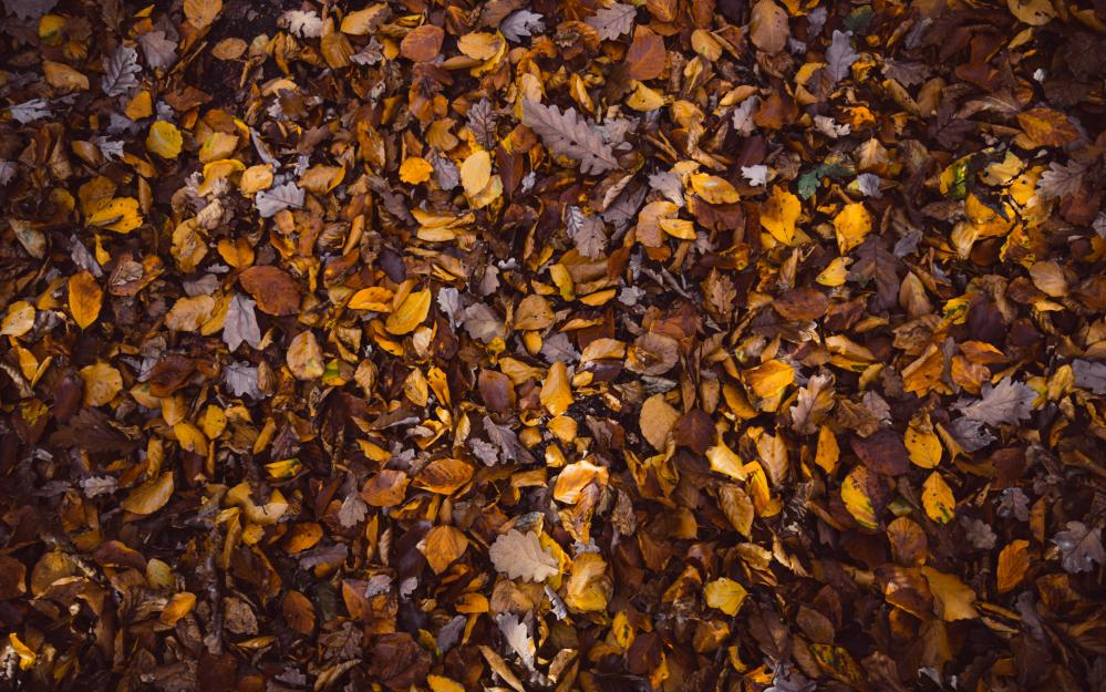 Fall Foliage Iphone Wallpaper Best 100 Fall Background Pictures Download Free Images