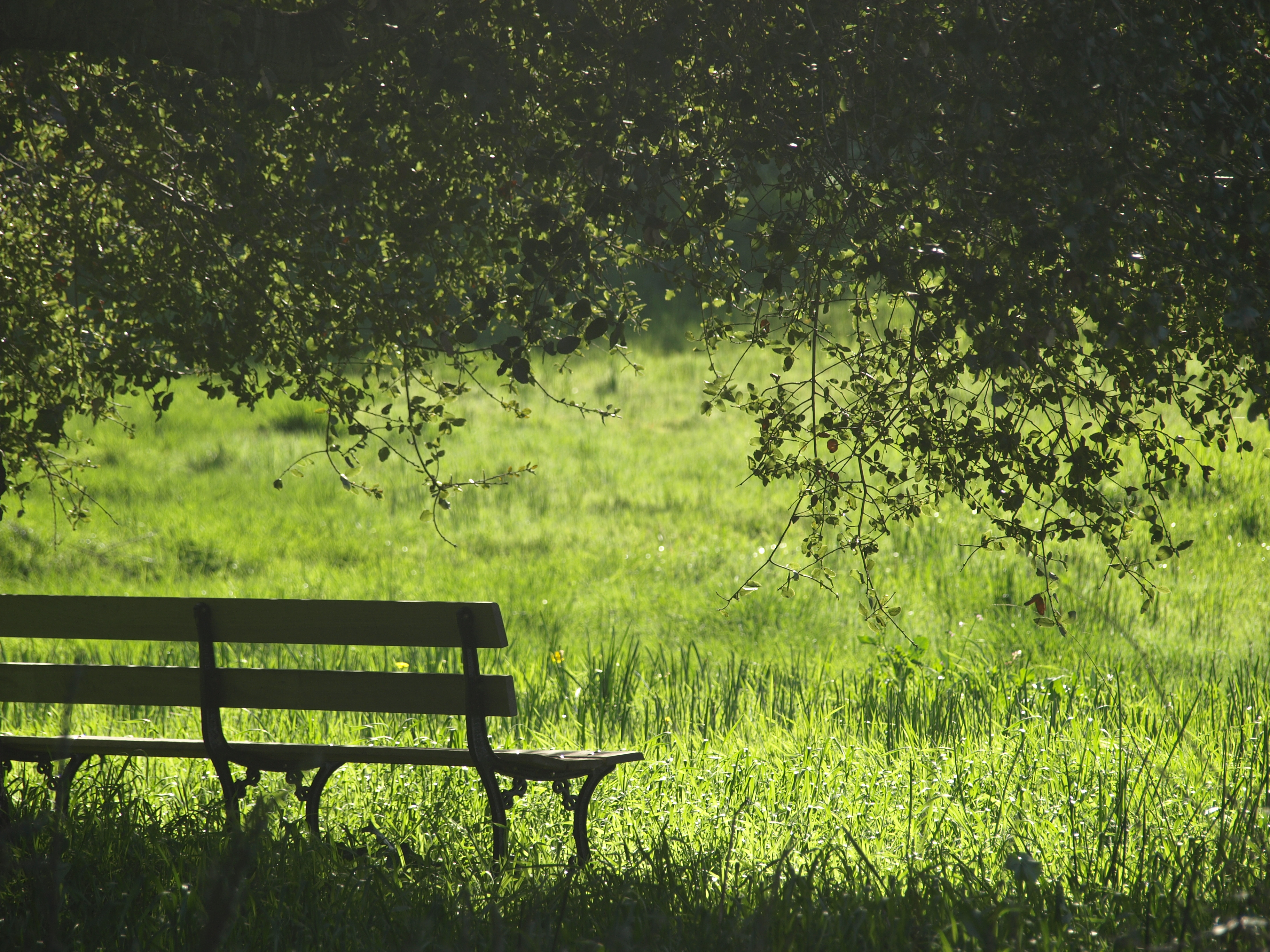 Free Landscape Wallpaper Hd Grass Park Bench Bench And Tree Hd Photo By Olesya