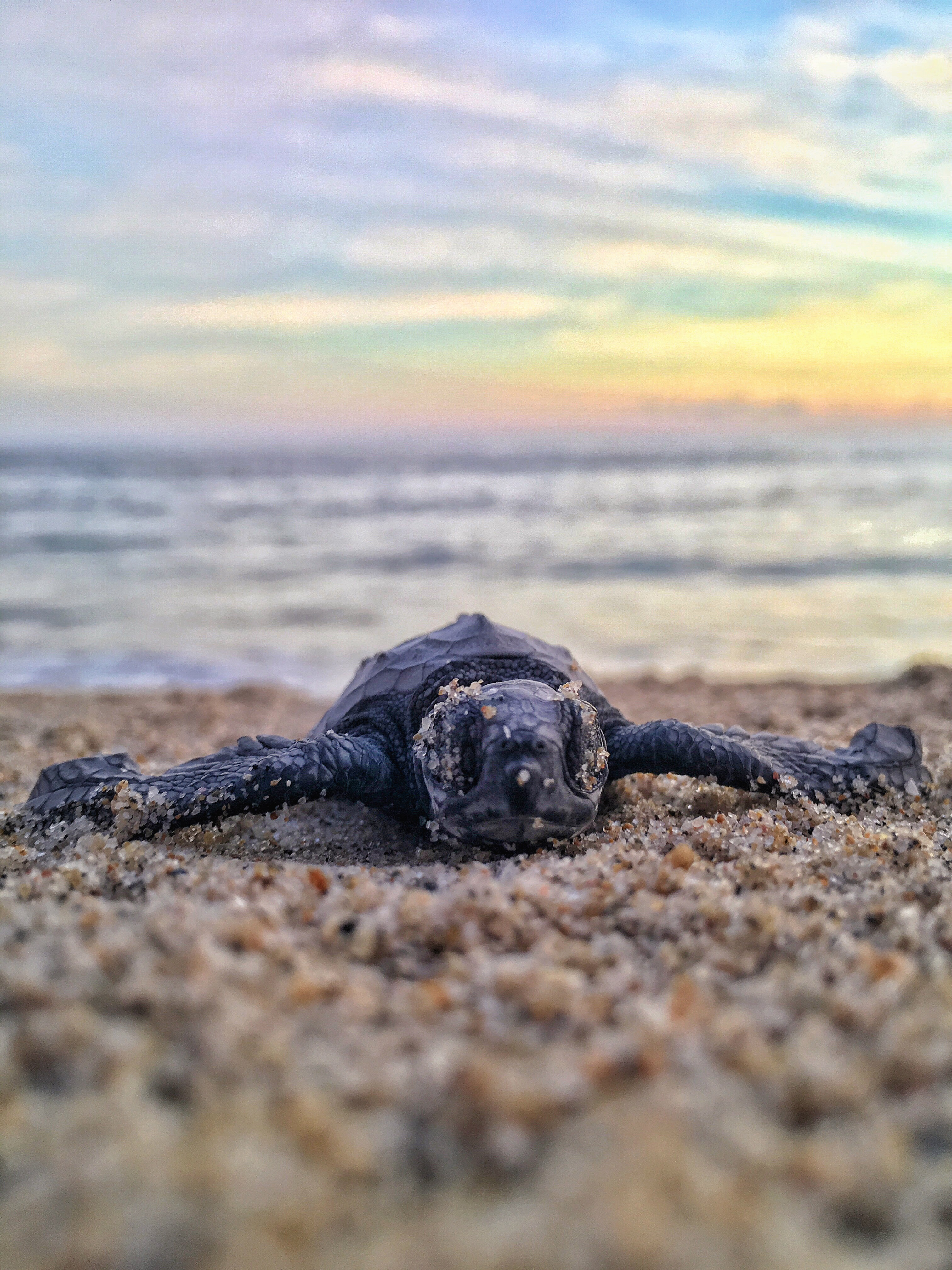 Sea Turtles Wallpaper 100 Sea Turtle Pictures Download Free Images On Unsplash