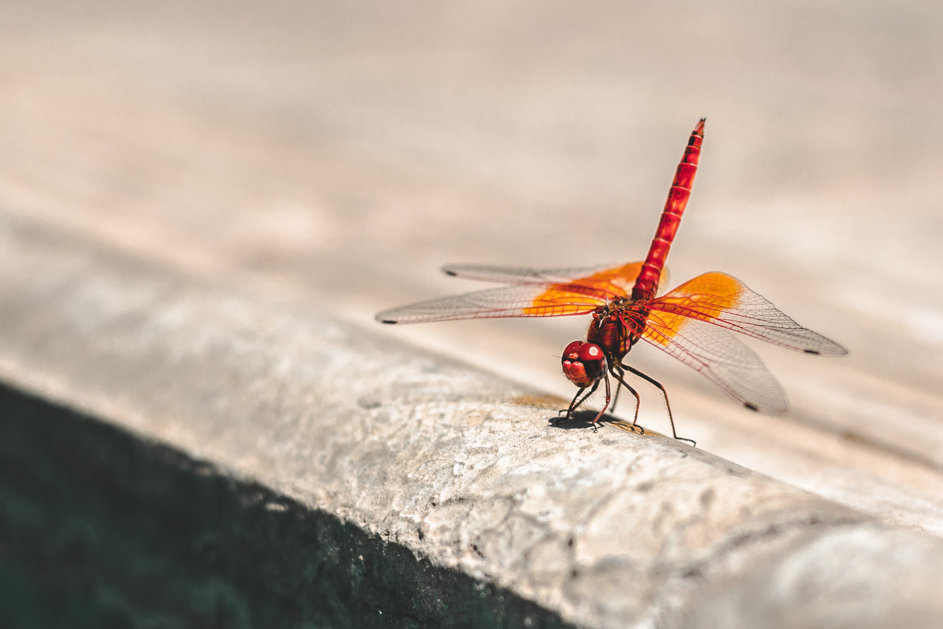 Wallpapers For Iphone 3 Dragonfly Pictures Download Free Images On Unsplash