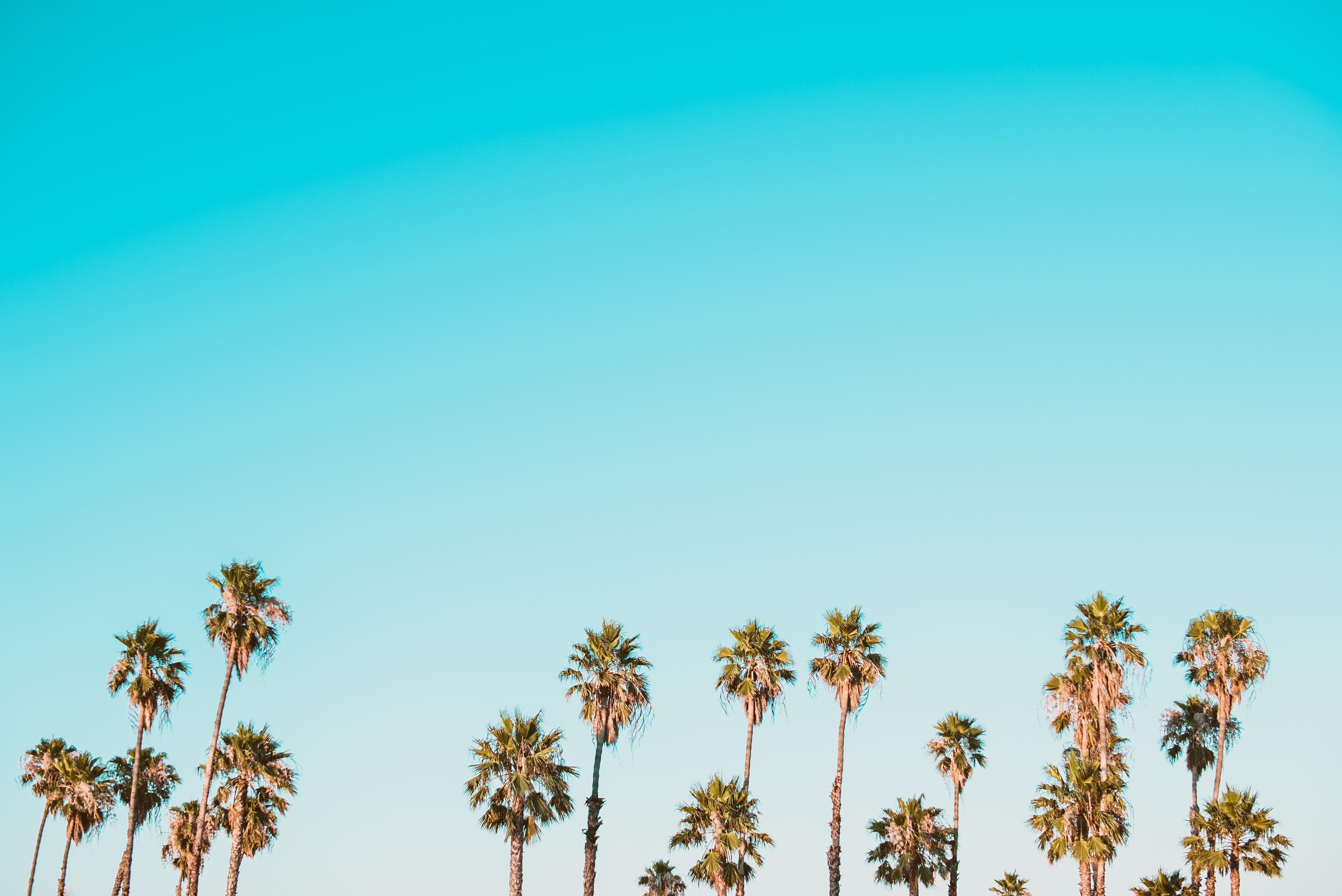 Cute Pineapple Iphone Wallpaper Download Summer Wallpapers Unsplash