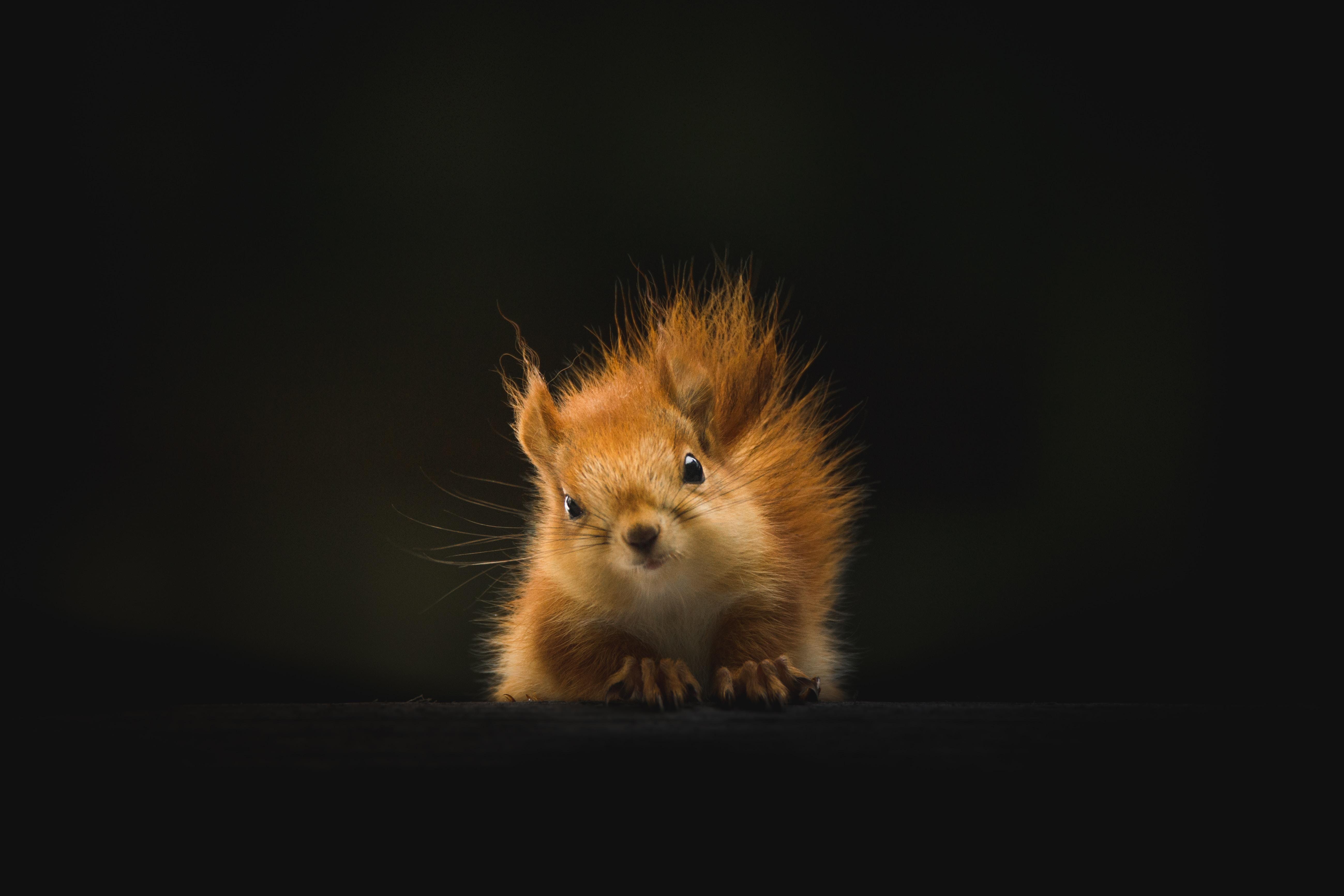 Kawaii Fall Wallpaper The Staring Squirrel Photo By Geran De Klerk Geran On