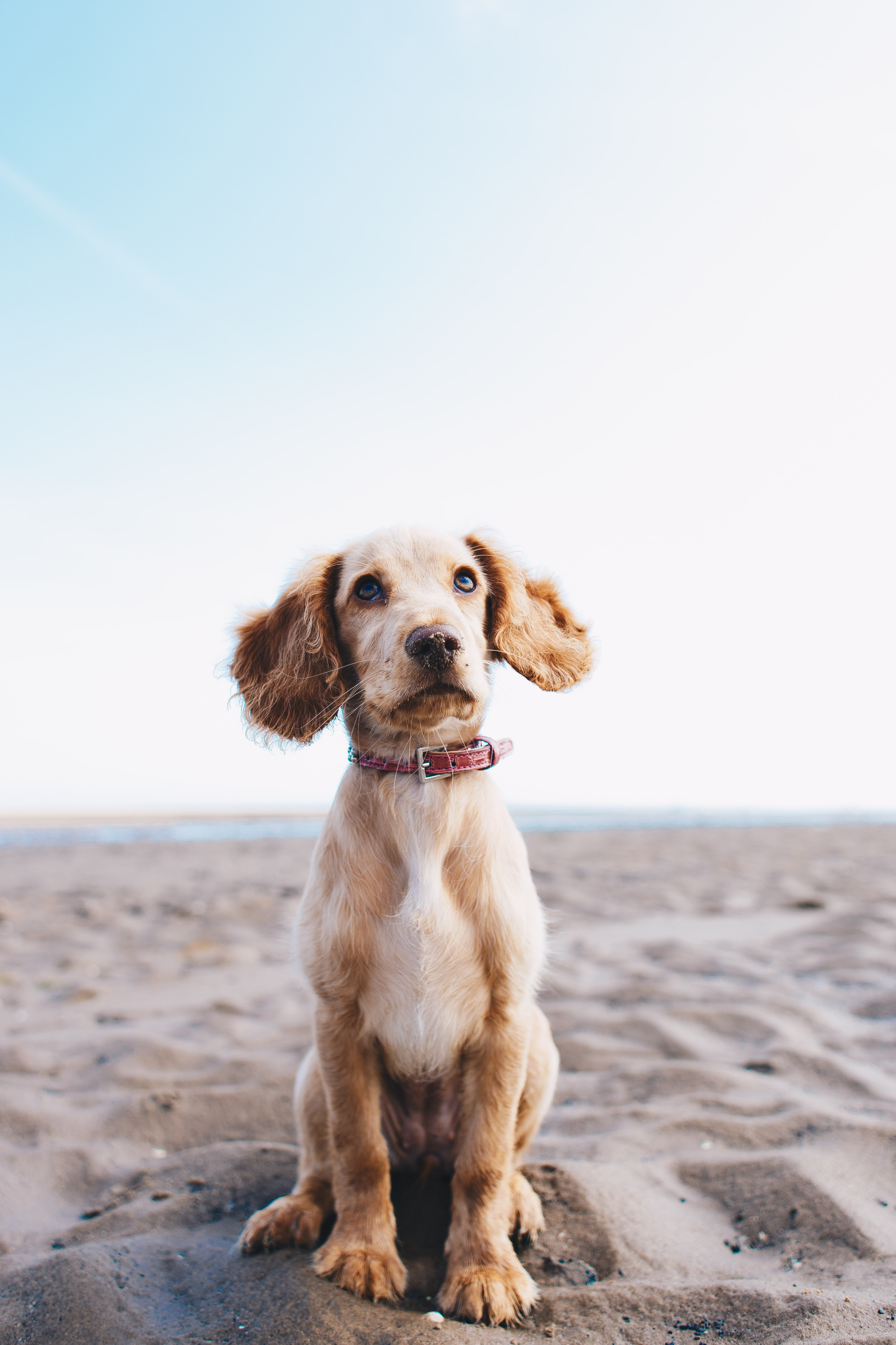 Girl On The Road Wallpaper Best 100 Dog Images Download Free Pictures On Unsplash