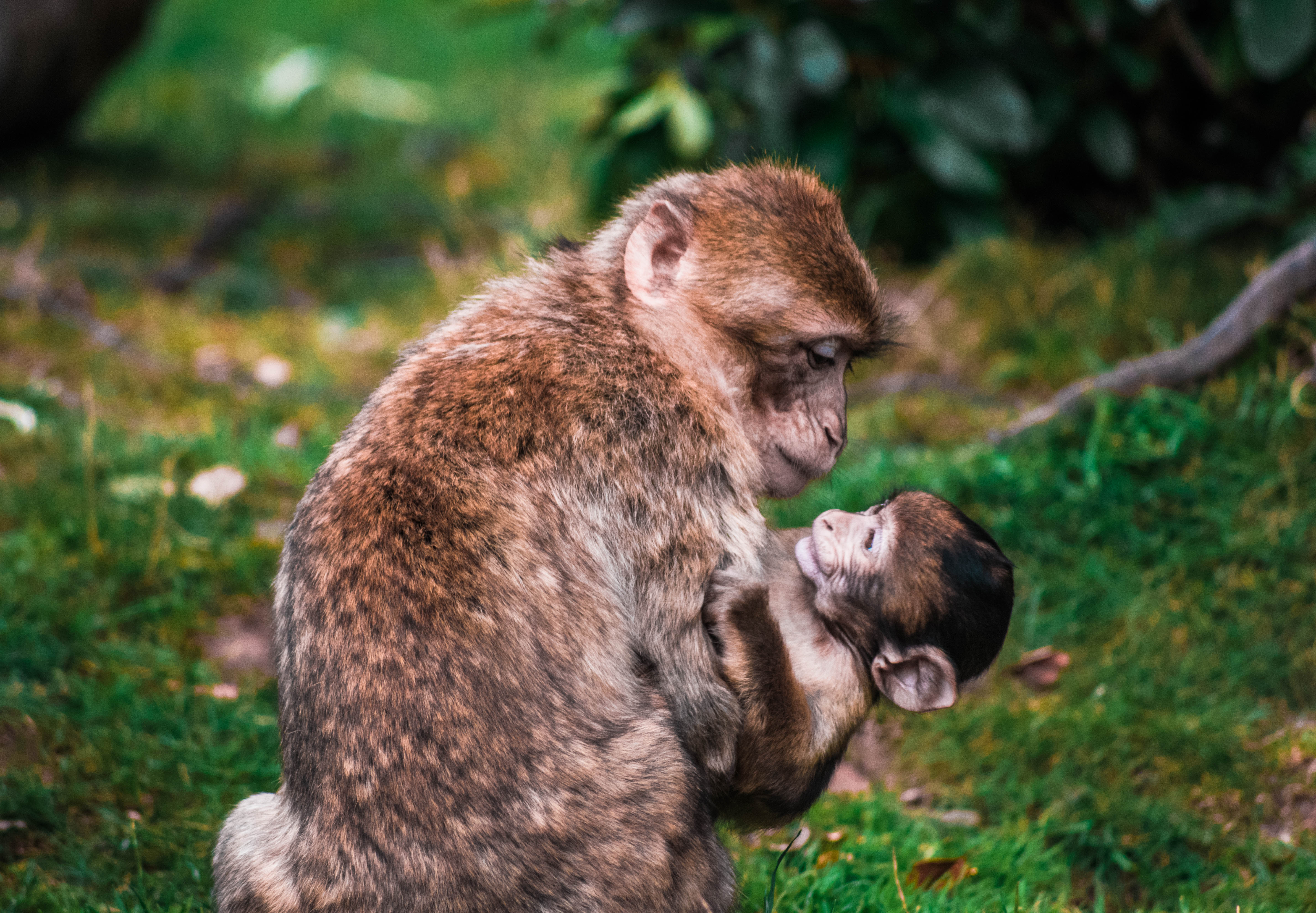 Images Of Hd Love Wallpapers Baby Monkey Monkey Animal And Monkey Family Hd Photo By