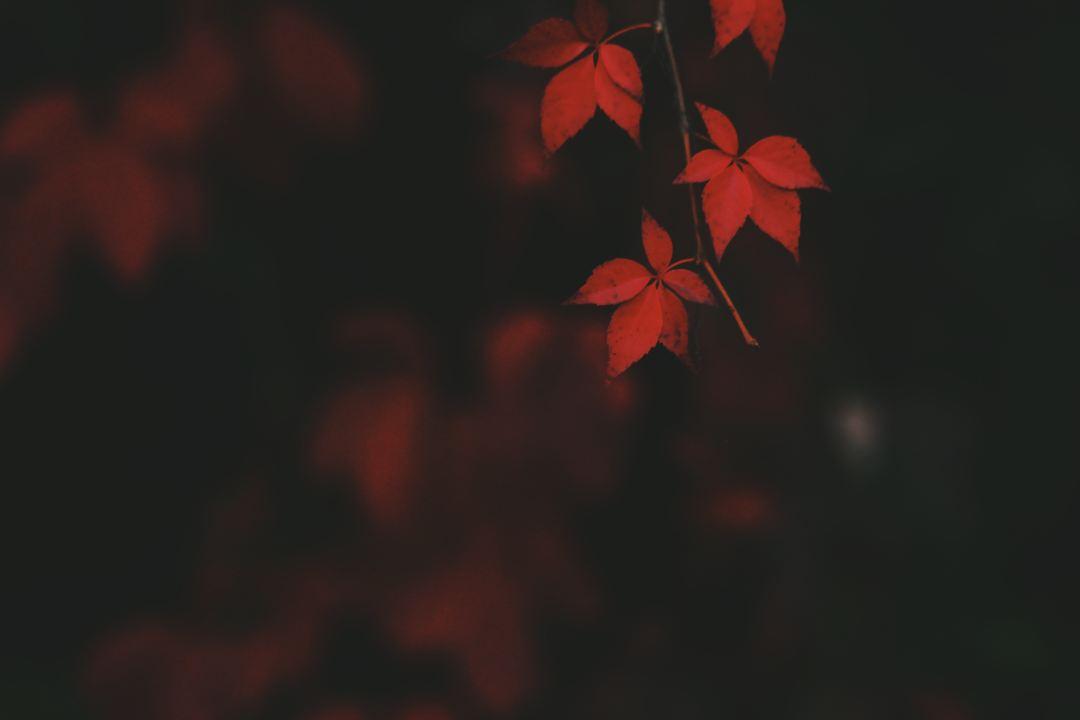 Dark Fall Iphone Wallpaper Download Fall Wallpapers Unsplash