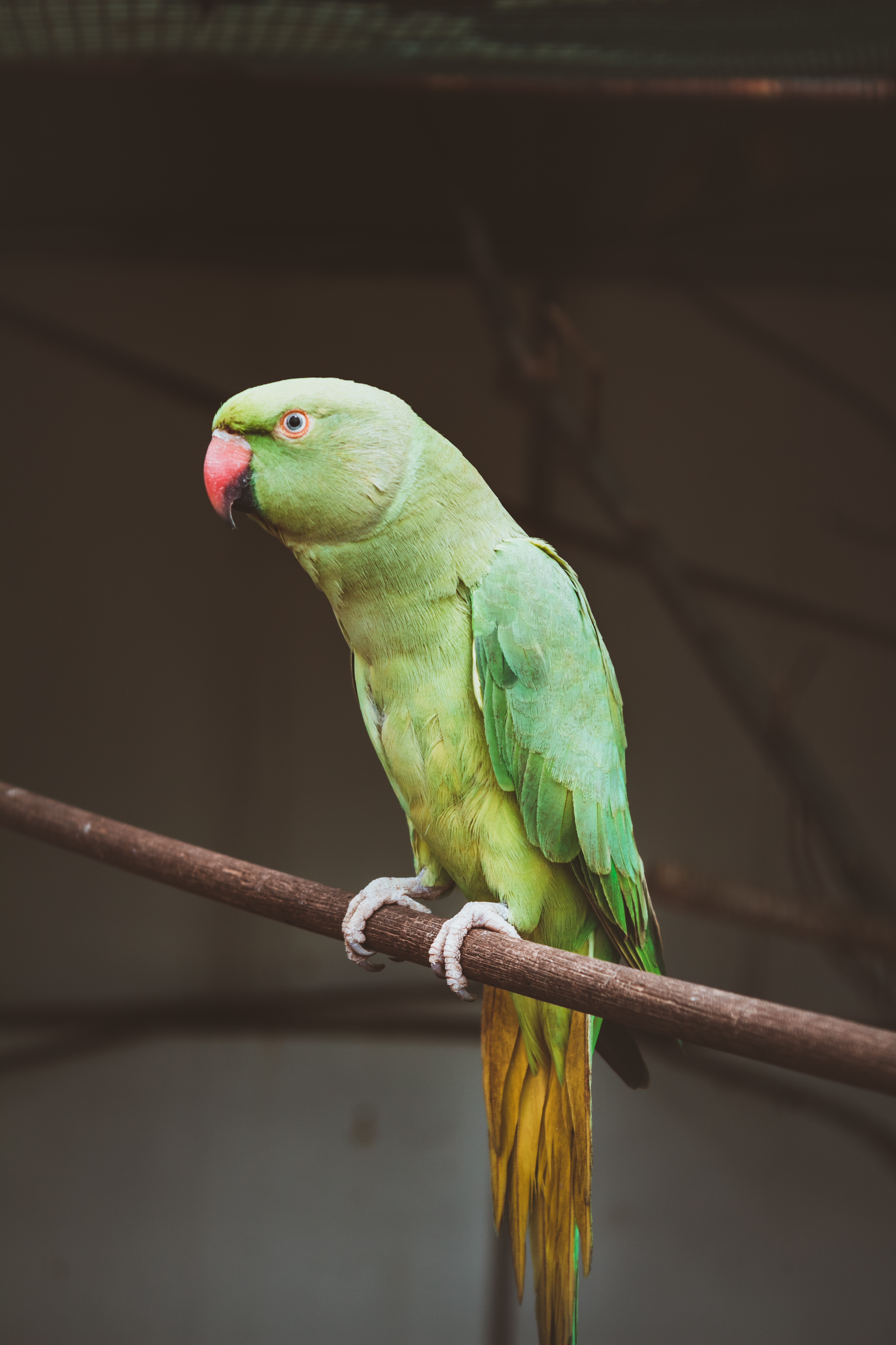 Parot Wallpapers 500 Parrot Pictures Download Free Images On Unsplash