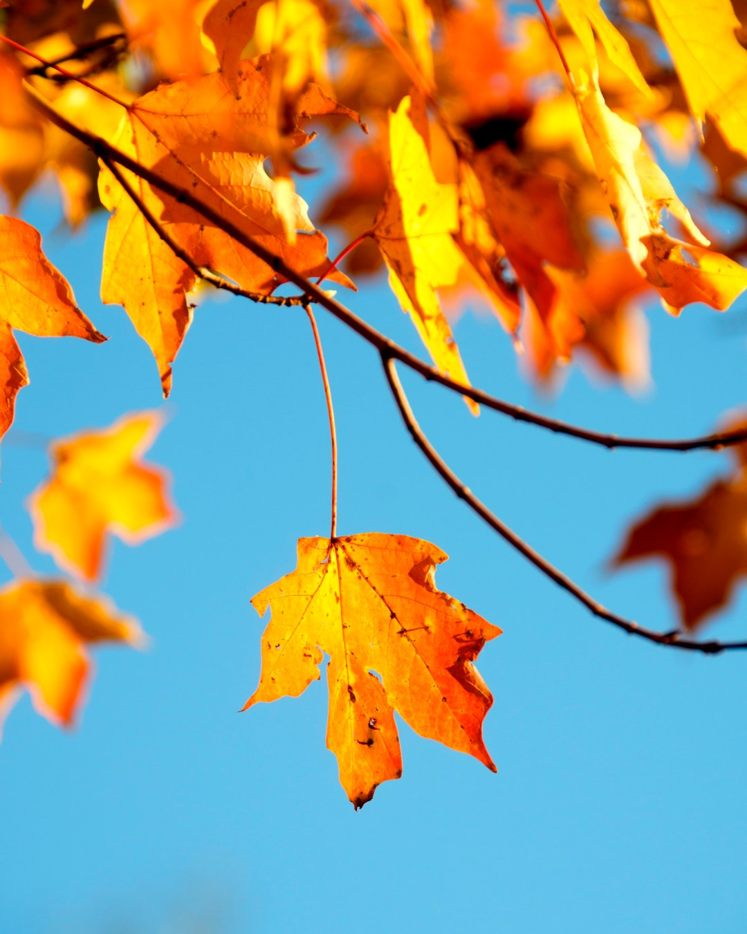 Fall Of The Leafe Wallpaper Autumn Images Download Free Images On Unsplash
