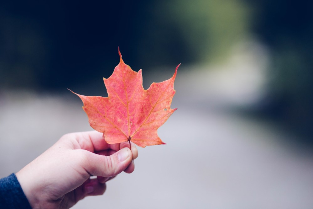 Fall Of The Leafe Wallpaper September Pictures Download Free Images On Unsplash