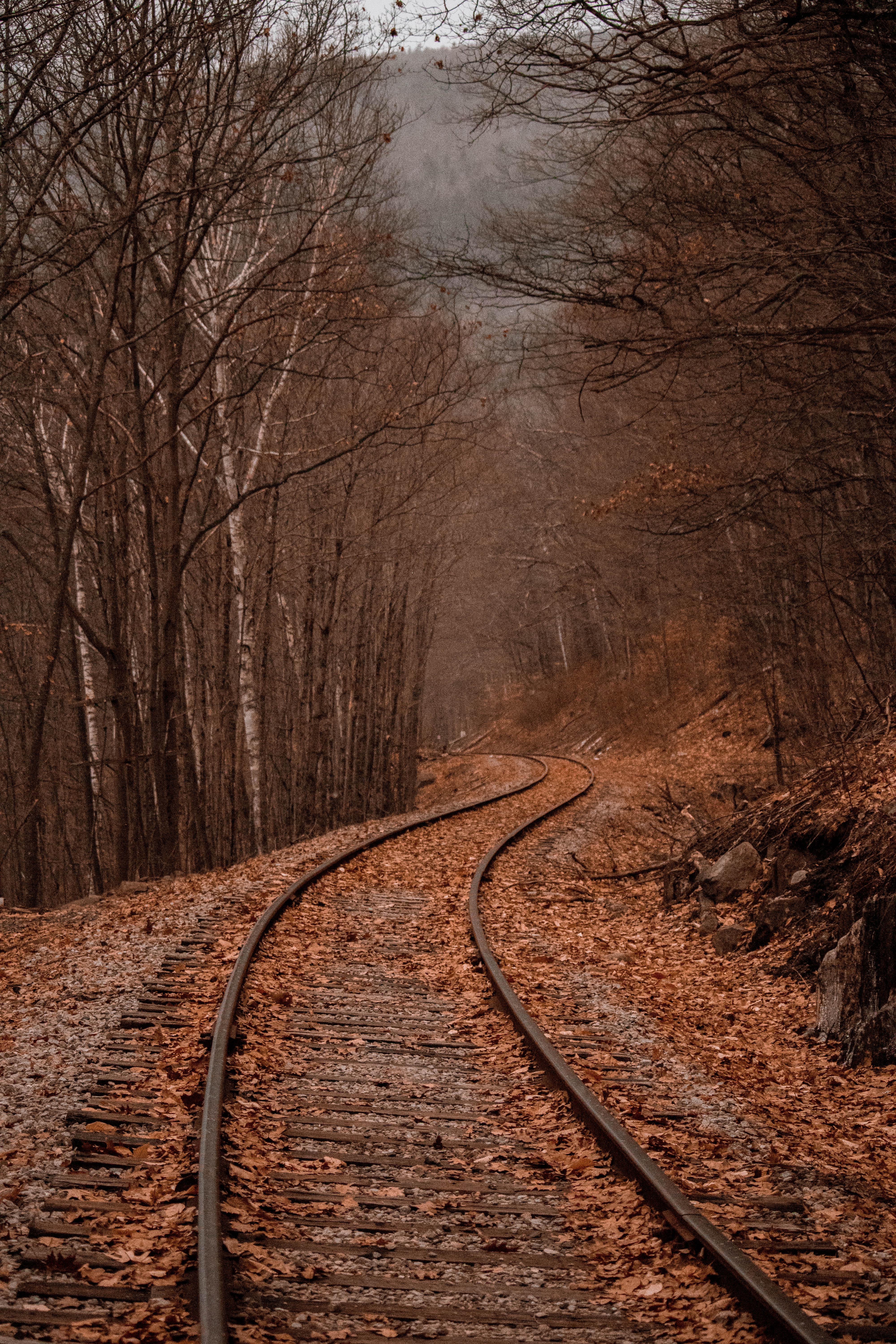 New Hampshire Fall Foliage Wallpaper Autumn Images Download Free Images On Unsplash
