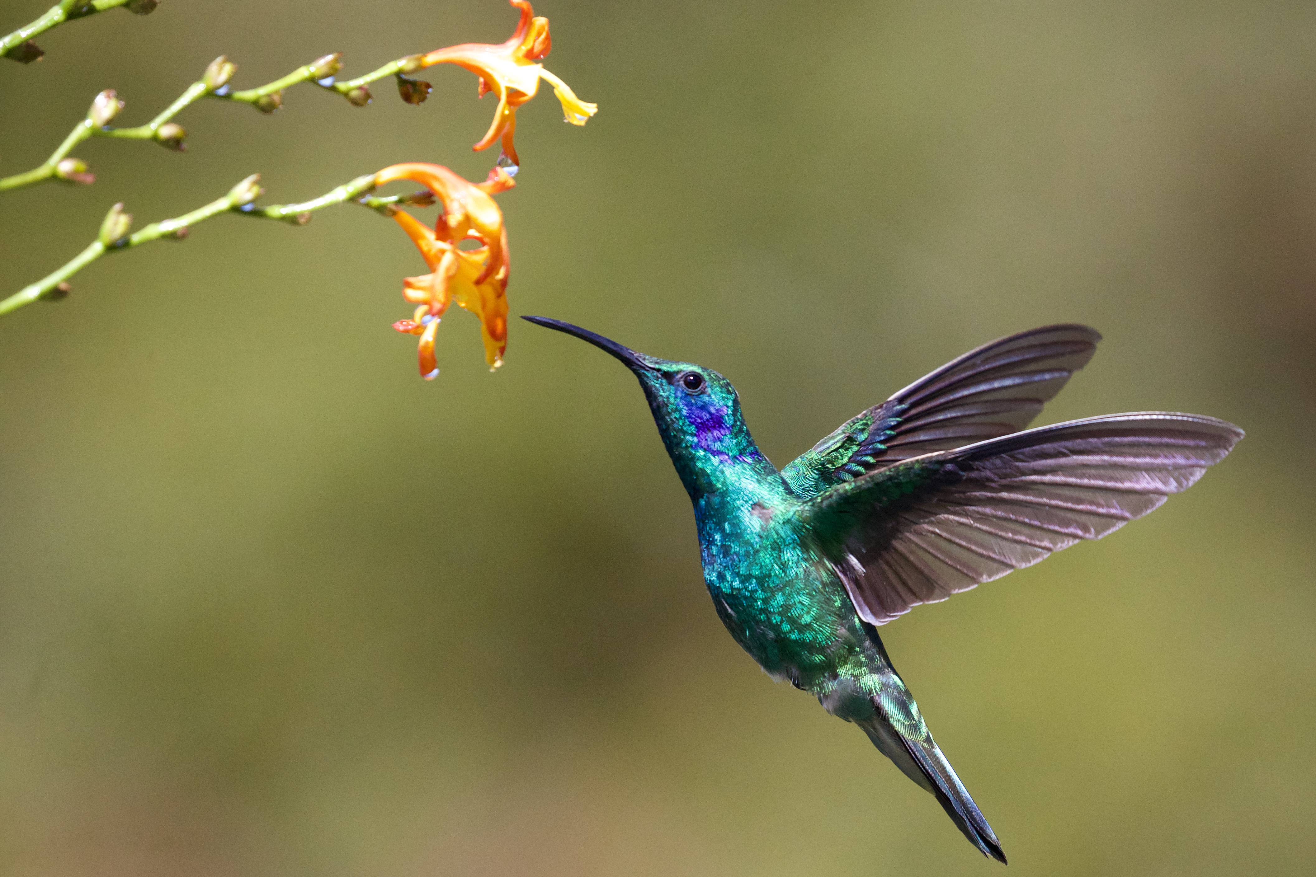 Wings Wallpaper Hd Hummingbird Pictures Hd Download Free Images On Unsplash