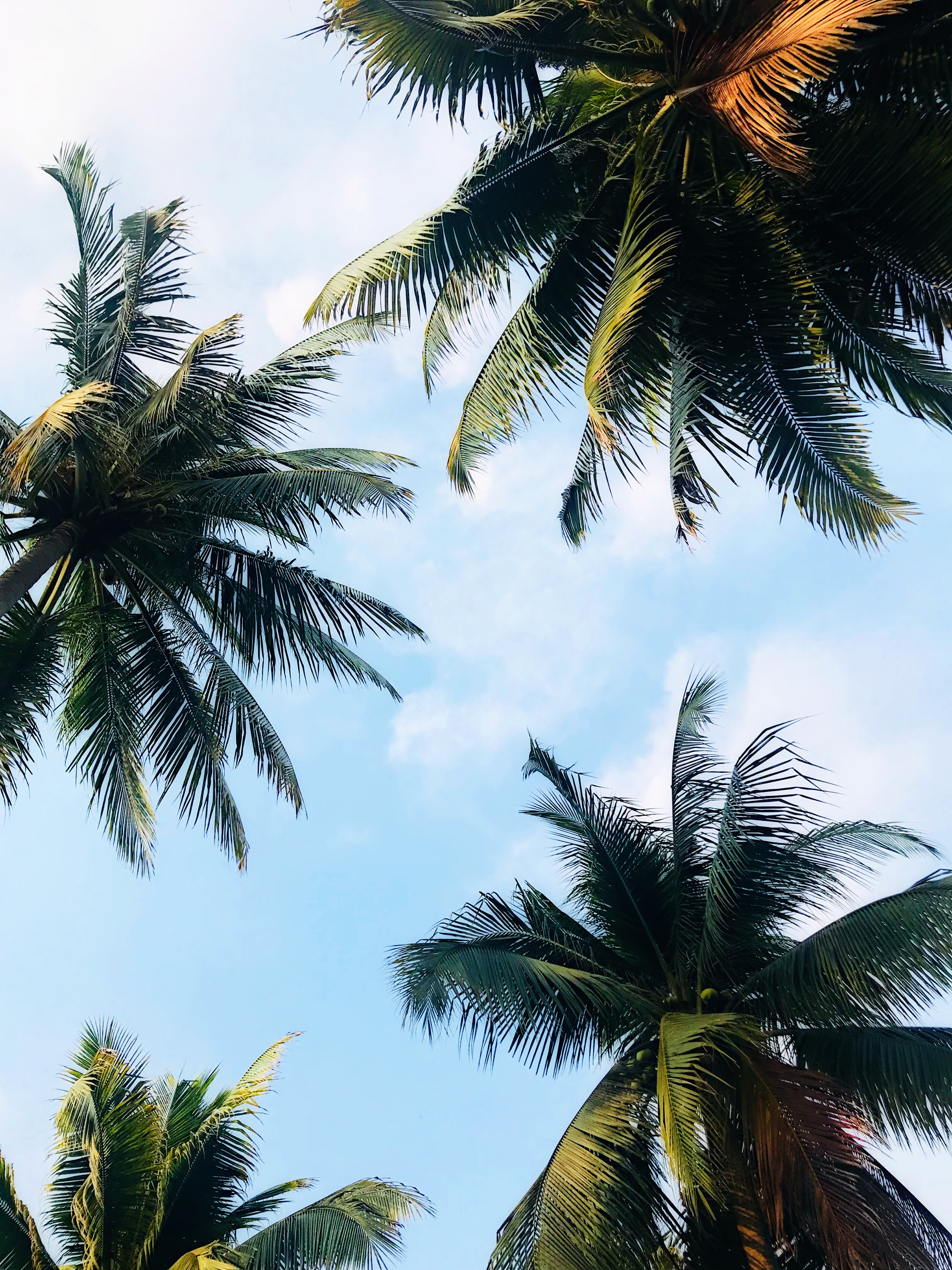 Palm Tree Wallpapers 20 Palm Tree Pictures Hd Download Free Images On Unsplash