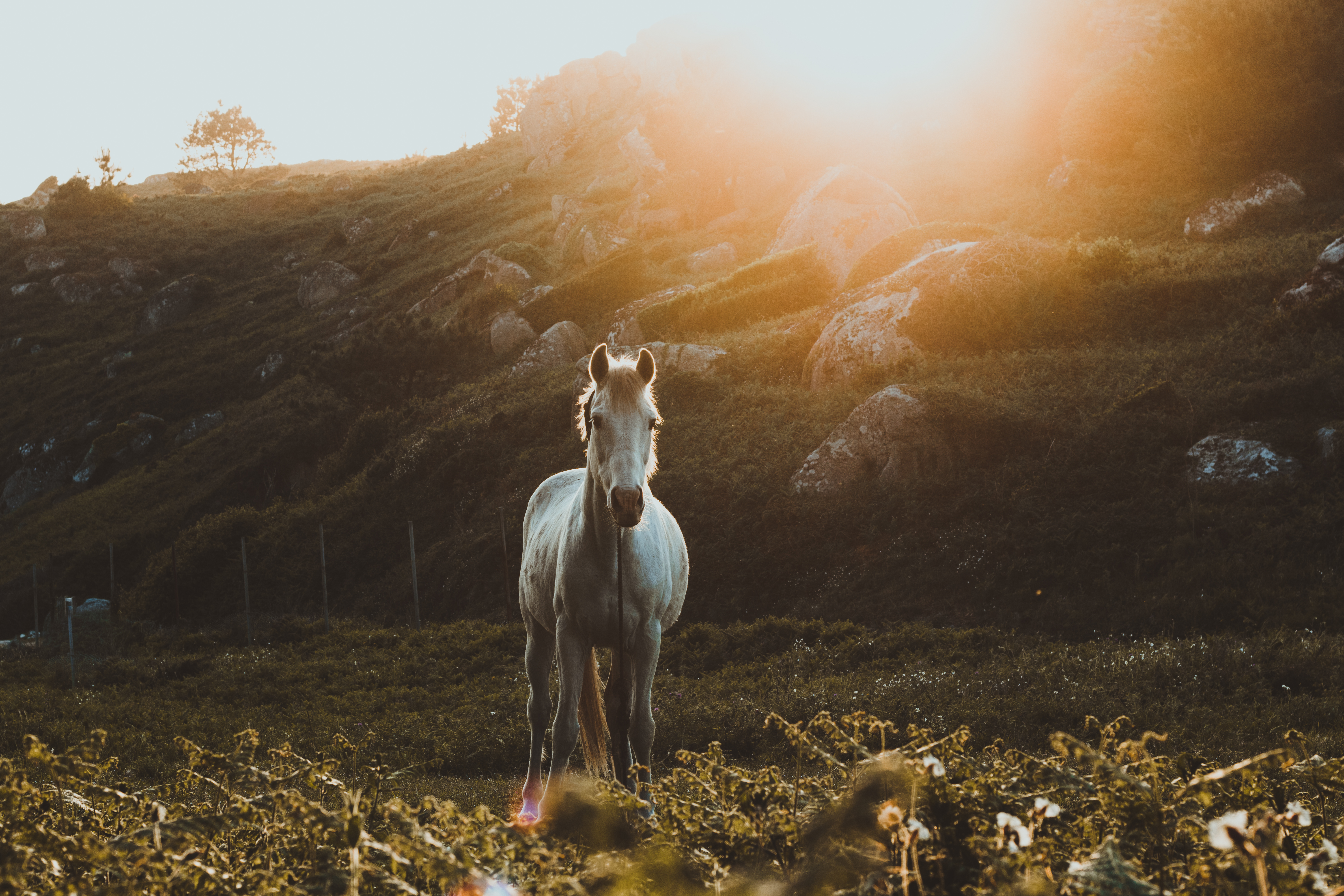 Running Horse 3d Wallpaper Best 20 Horse Pictures Hq Download Free Images On