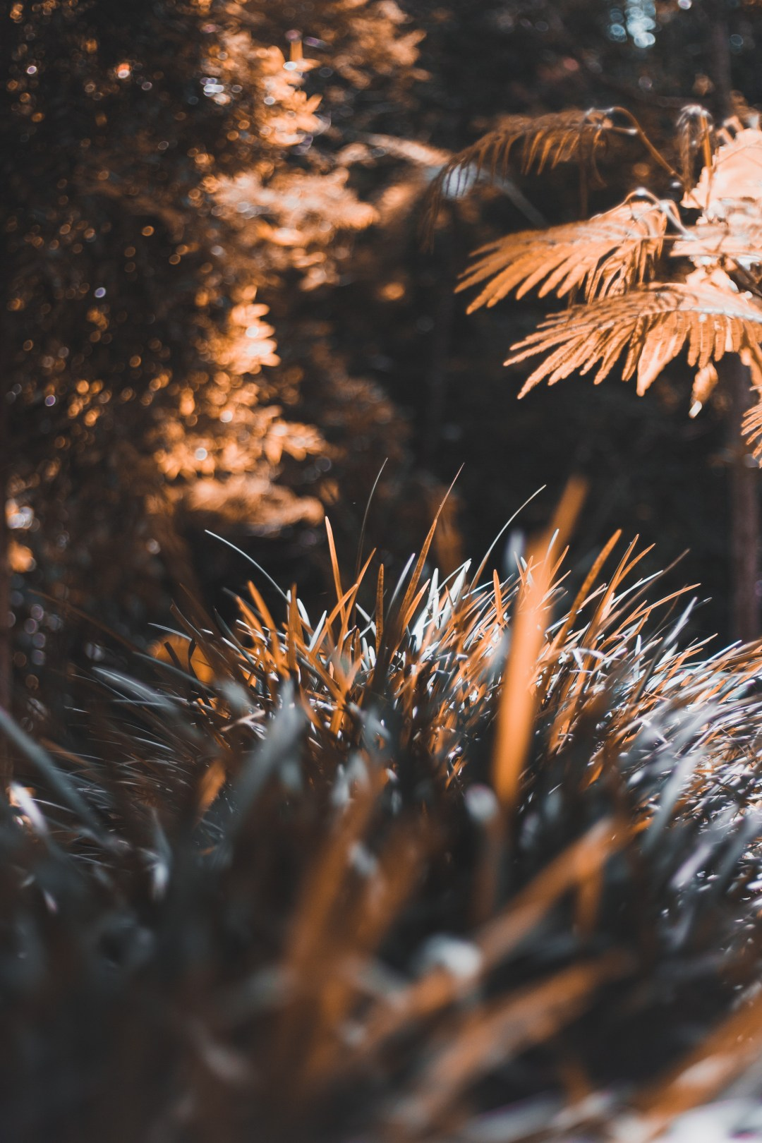 Cool Background Pictures [HD]   Download Free Images on Unsplash