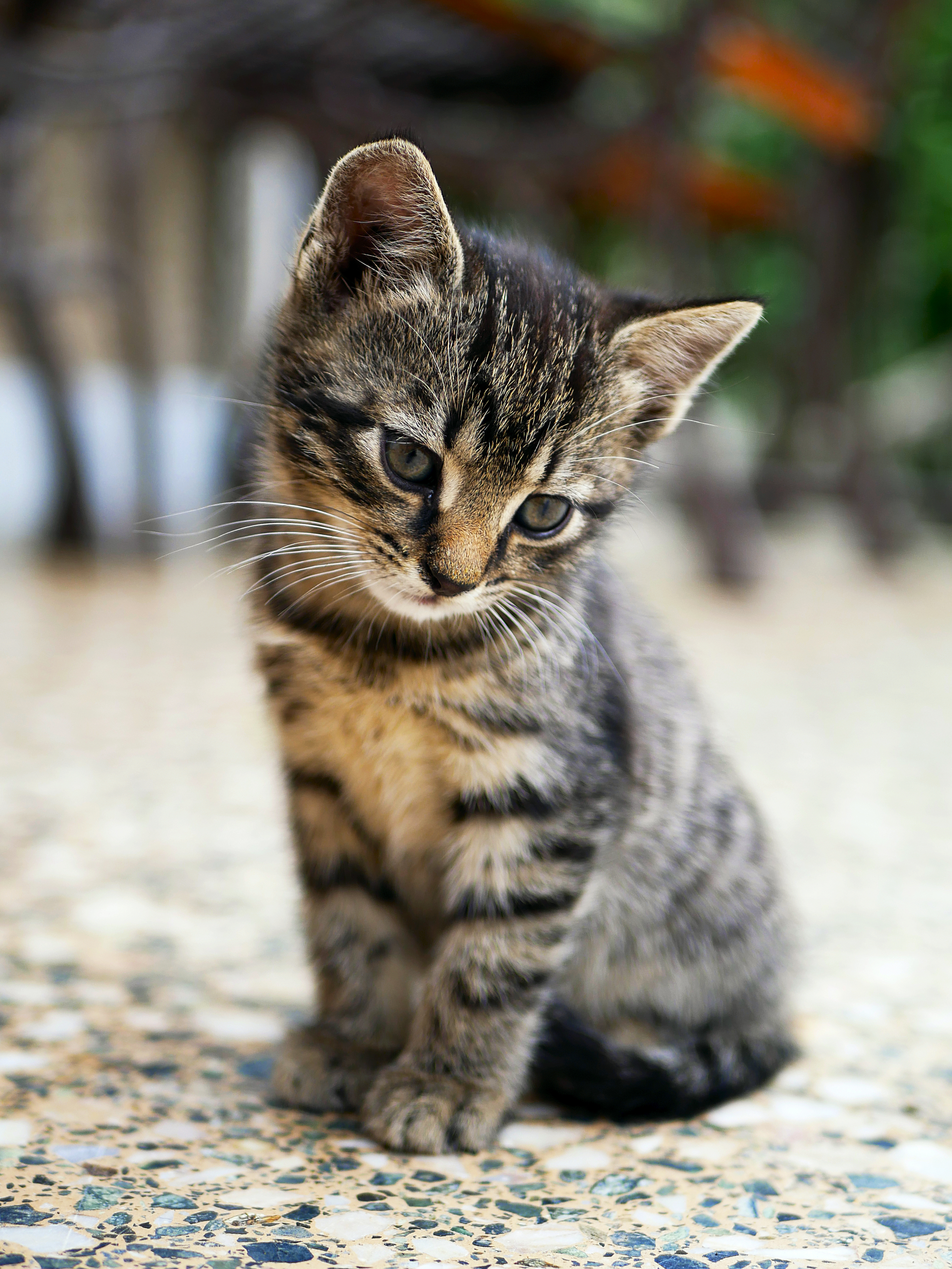 A Cute Puppy Wallpaper 100 Kitten Images Download Free Images On Unsplash