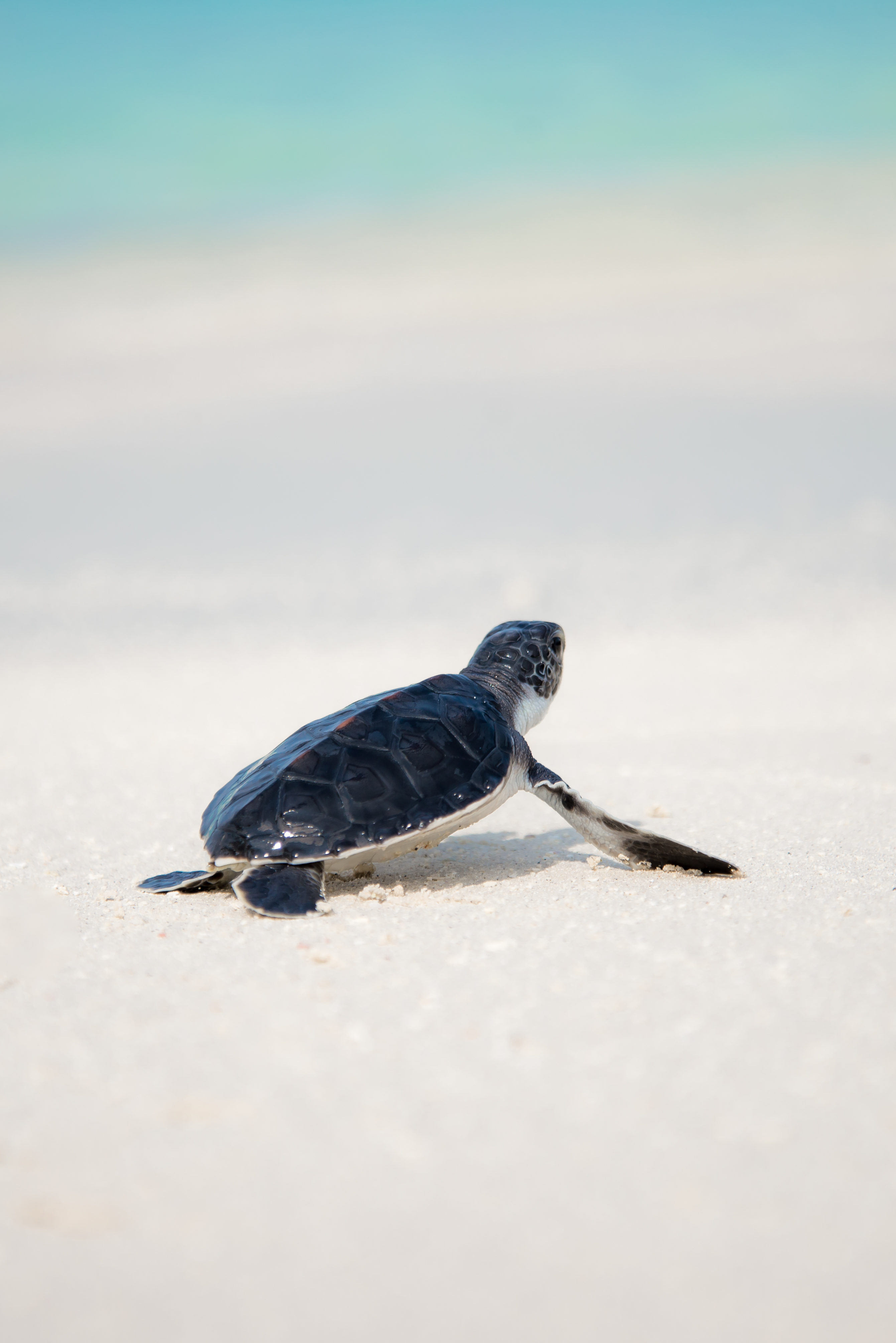 Sea Turtles Wallpaper 500 Turtle Pictures Download Free Images On Unsplash