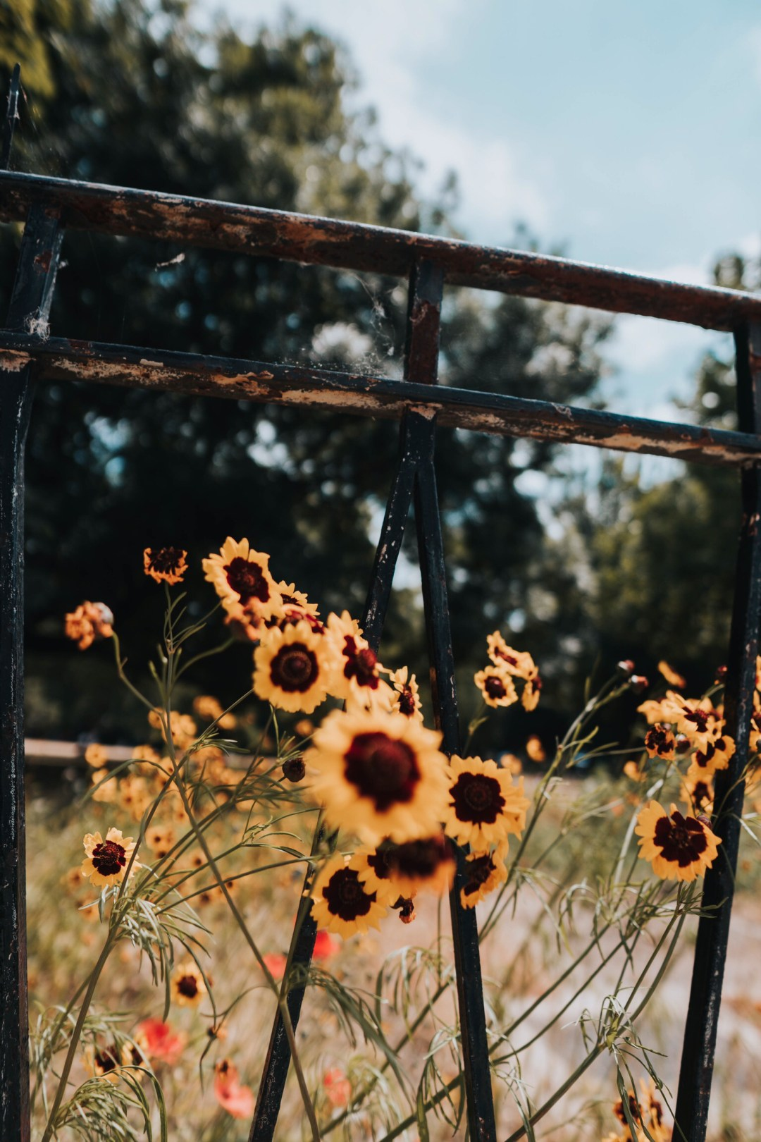 Outdoor Box London, Outdoor, Flower And Rust | Hd Photo By Dex Ezekiel