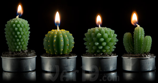 Plural Of Cactus Cactus Tea Light Candles: Set Of 16 Mini Cactus Candles