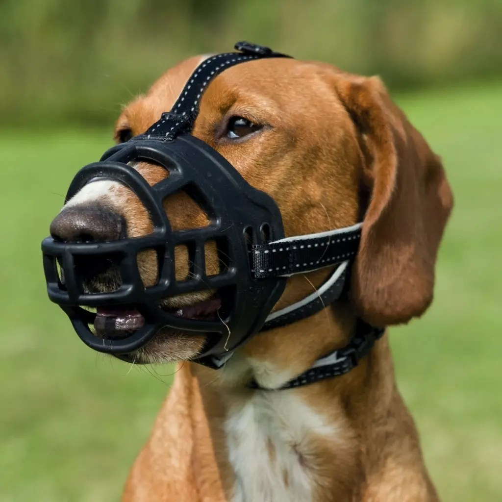 Franse Bulldog Vidaxl.co.uk | Trixie Dog Muzzle Flex Size Xl 17616