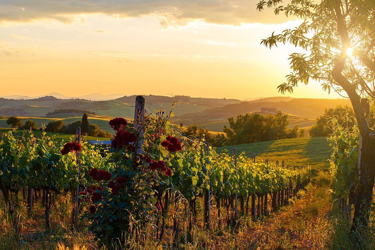 Fototapete Natur Most Popular Destinations For Red Wine Lovers