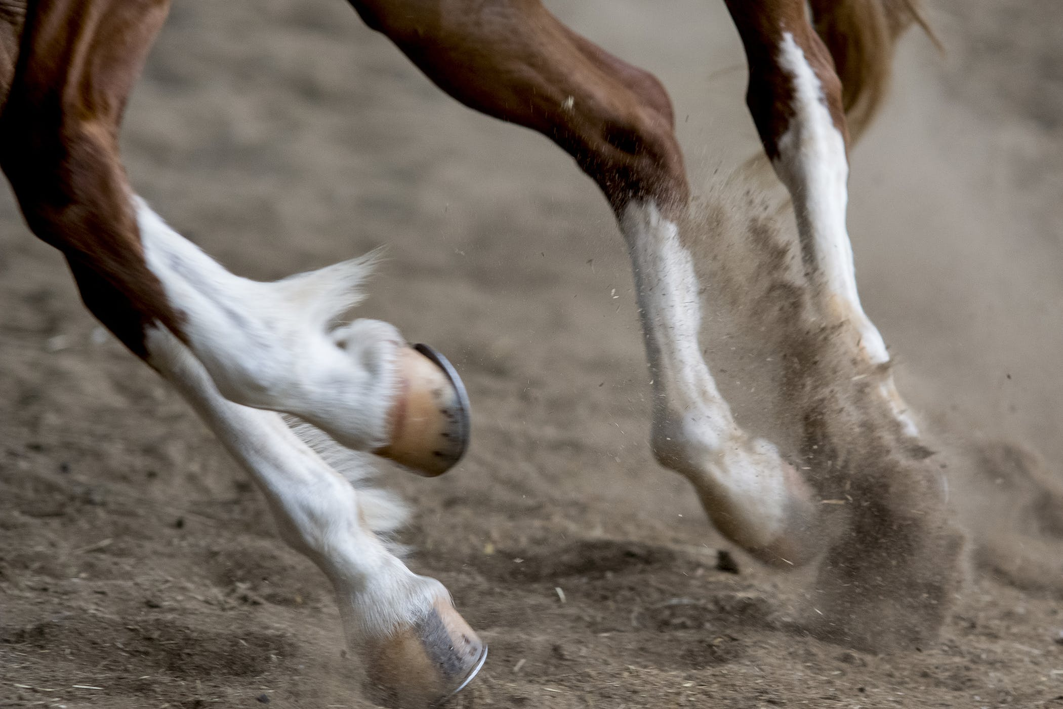 Horse Boots For Windgalls Best Horse 2017