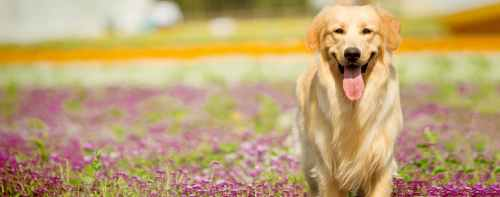 Medium Of Friendliest Dog Breeds