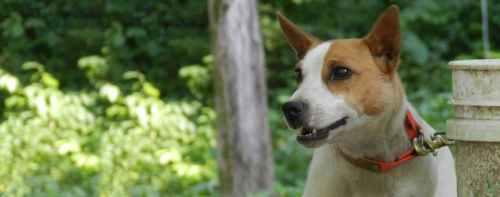 Medium Of Low Maintenance Dogs