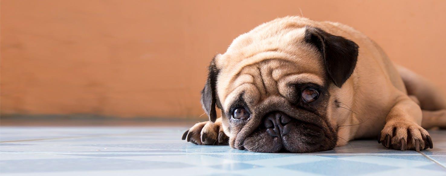 Fullsize Of Do Dogs Cry