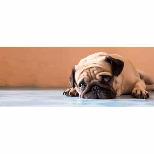 Medium Crop Of Do Dogs Cry