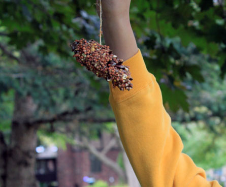Wild About Birds Diy Bird Feeders Kids Can Make