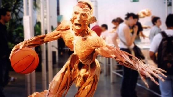 La mostra itinerante Body Worlds (ora a New York).