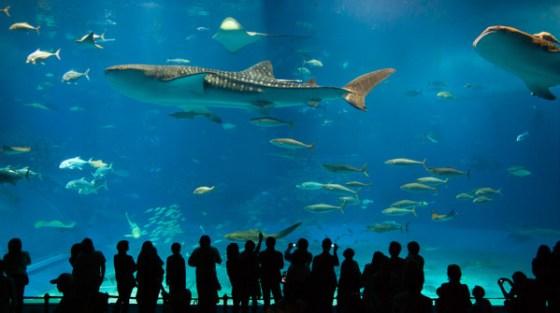 L'acquario Churaumi a Okinawa, in Giappone.