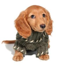 Do Dogs Really Need to Wear Sweaters? (with pictures)